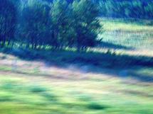 Tree Blur by SARA SILL