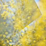 Wattle Abstract by JD