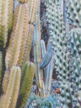 Blue Cactus by JD