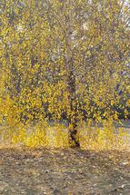 GOLD by Stop-mashina