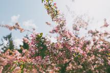 Spring Blossoms by Katie Buckman