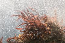 Seaweed Bubbles by Katie Buckman