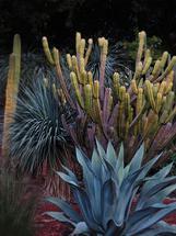 Cactus Magic by JD