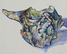 Ocean Skeleton by Alicia Gabriel