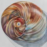 Terra's Shell by Alicia Gabriel