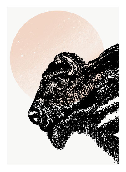 art prints - The Bison by Alicia Youngken