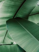 tropical leaves by Alicia Abla