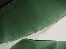 leaf & light 1 by Alicia Abla