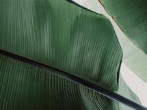 leaf & light 3 by Alicia Abla
