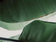 leaf & light 4 by Alicia Abla