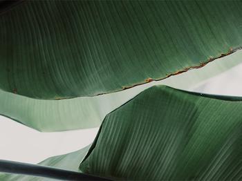 leaf & light 4