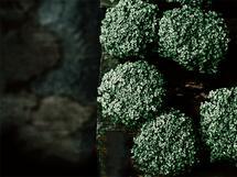 greenhouse studies 3 by Alicia Abla
