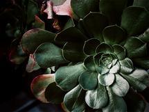 greenhouse studies 4 by Alicia Abla