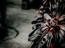 greenhouse studies 2 by Alicia Abla