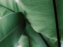 greenhouse studies 5 by Alicia Abla