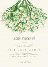 Baby's Breath Sip & See by Anna Joseph