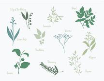 Burgeoning Botanist by Jessica Kelemen