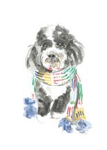Doodle in Scarf by Liza Burns