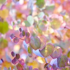 Fall in Sherbet