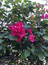 Summer Blossoms by Marie Barletta