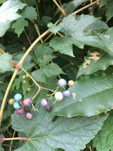 Colorful Berries by Marie Barletta
