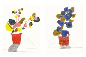Drawings of Plants