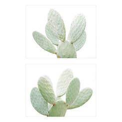 Cactus Portrait 1 and 2