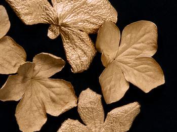 Fallen Black Gold