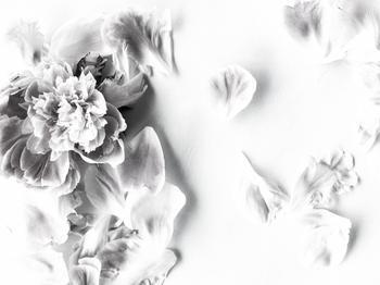 fallen petals ll
